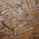 Rain Forest Light Brown